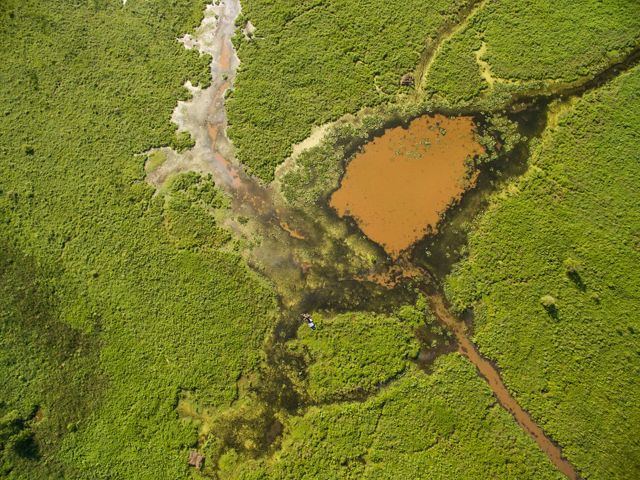 Aerial view looking down on a brown pond surrounded by green vegetation with streams and channels criss-crossing it.
