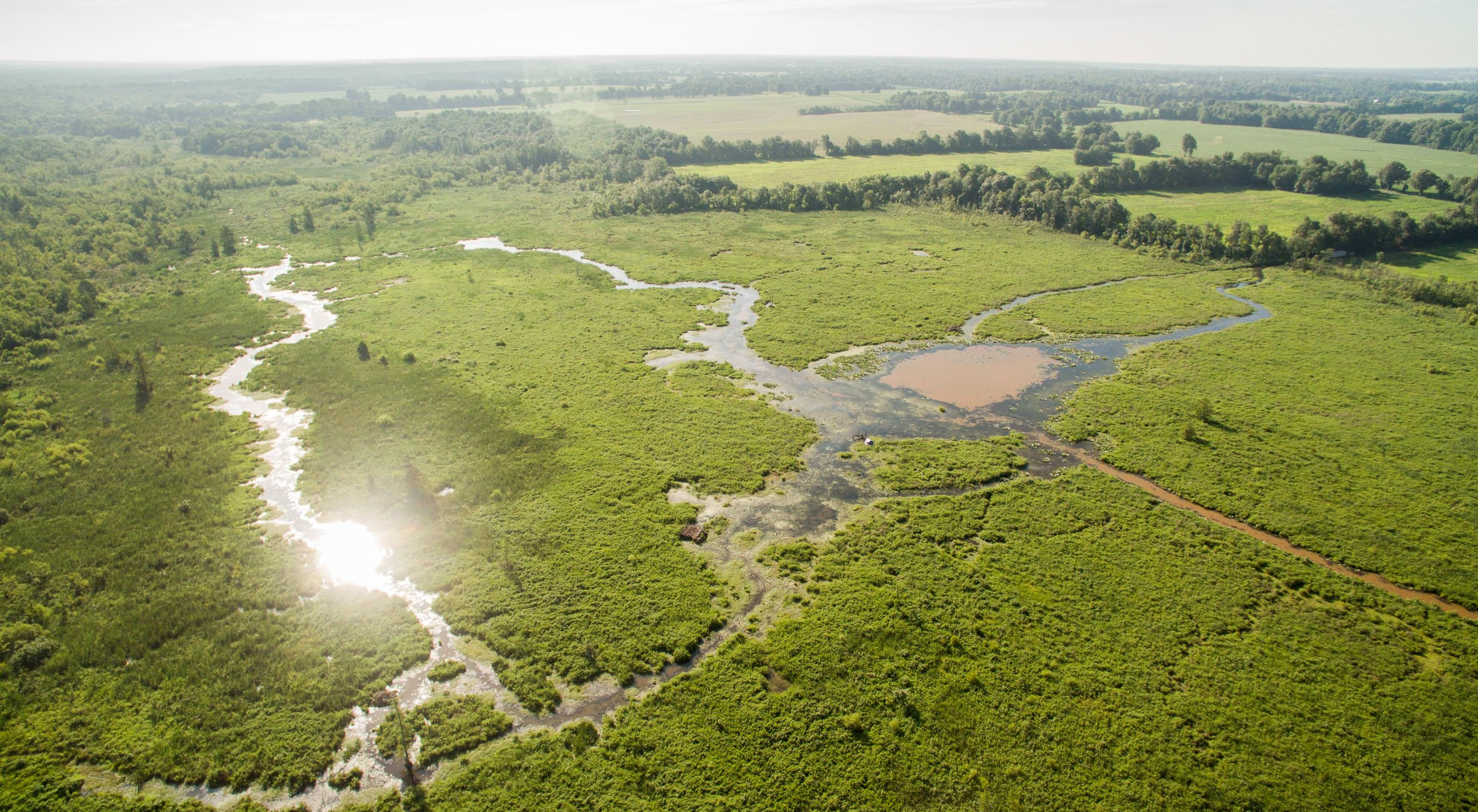 An image of a wetland