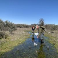 Volunteers do monitoring work in the wetlands at Whetstone Savanna Preserve in Southern Oregon