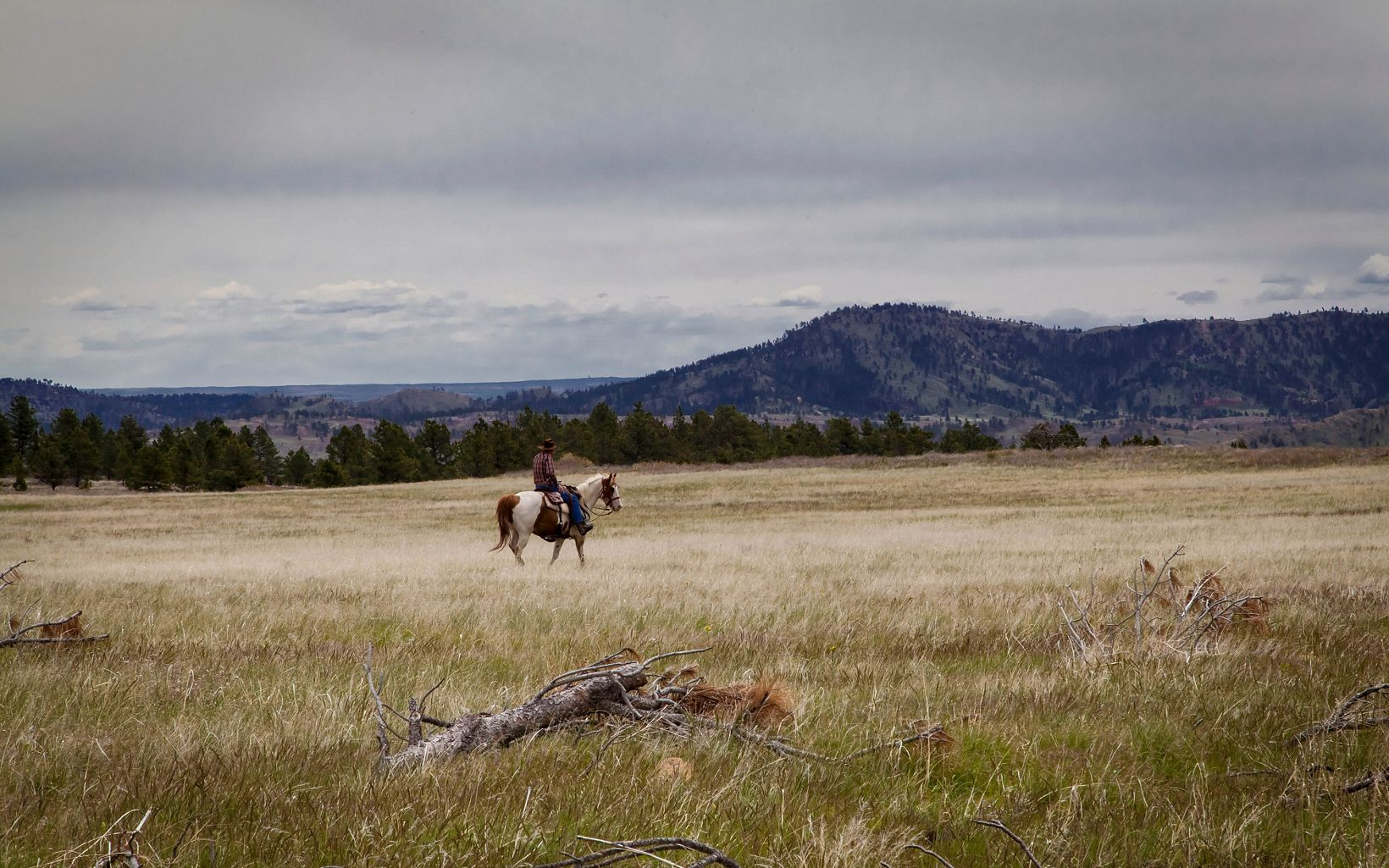 Man riding horseback in the Black Hills.