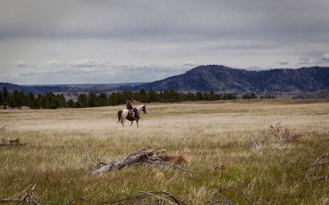 Person riding a horse in the Black Hills