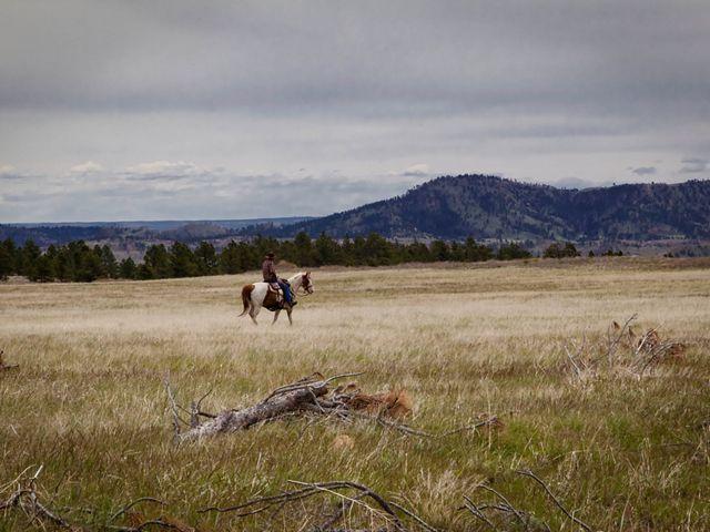 Person on horseback at TNC's Whitney Preserve in the Black Hills of South Dakota.