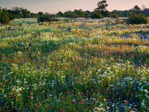 Glowing wildflowers in the sunset.