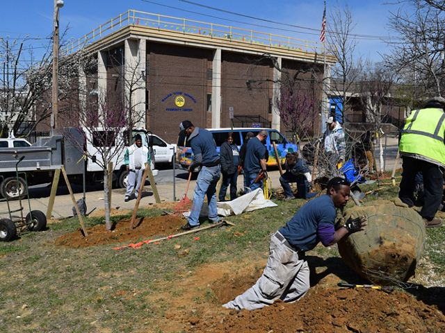 Trainees from Branches to Chances planted eight native trees during our first lot-greening effort in Wilmington's West City Center.