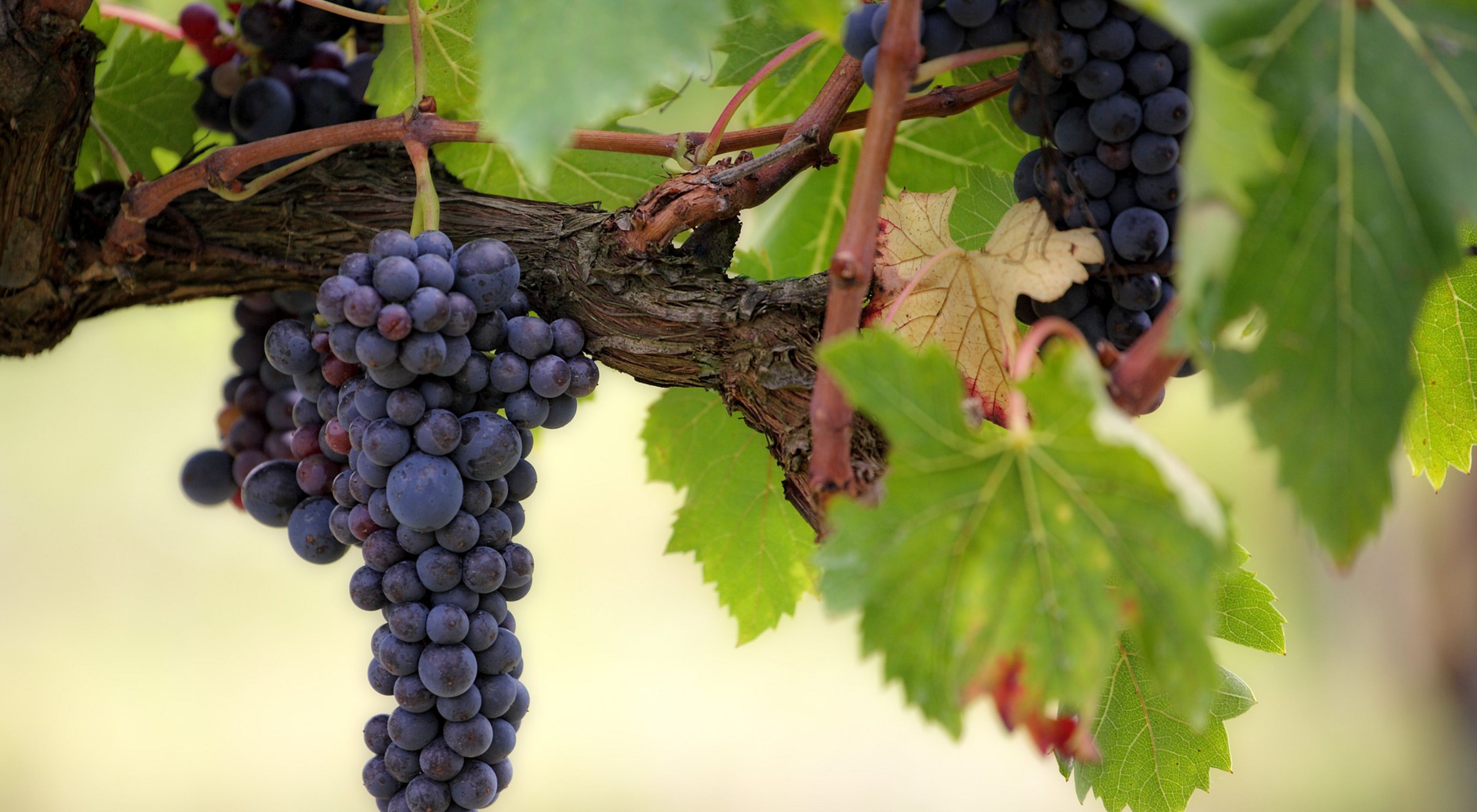 The Finger Lakes boast a booming wine industry.