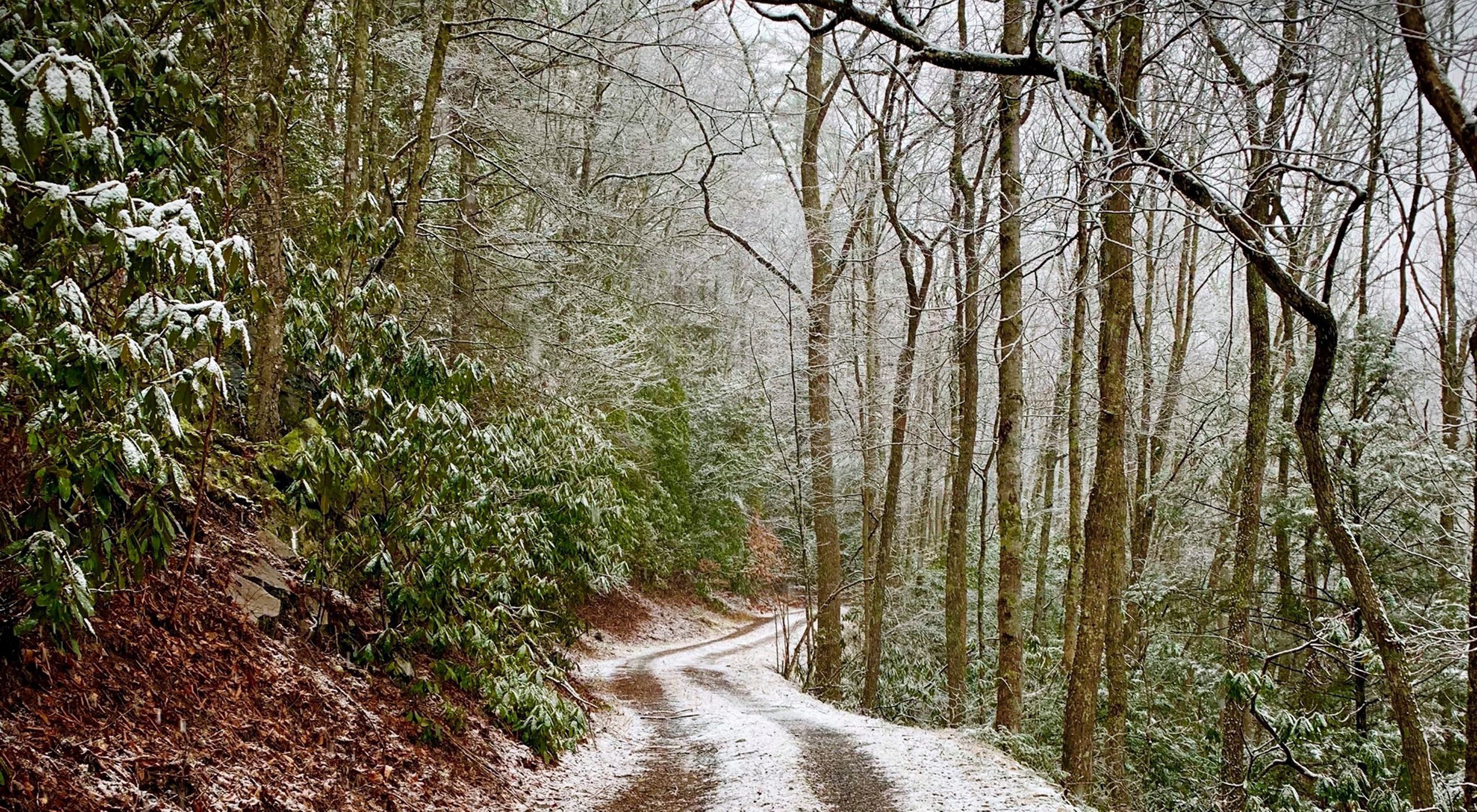 Snow dusts a dirt road surrounded by a forest.