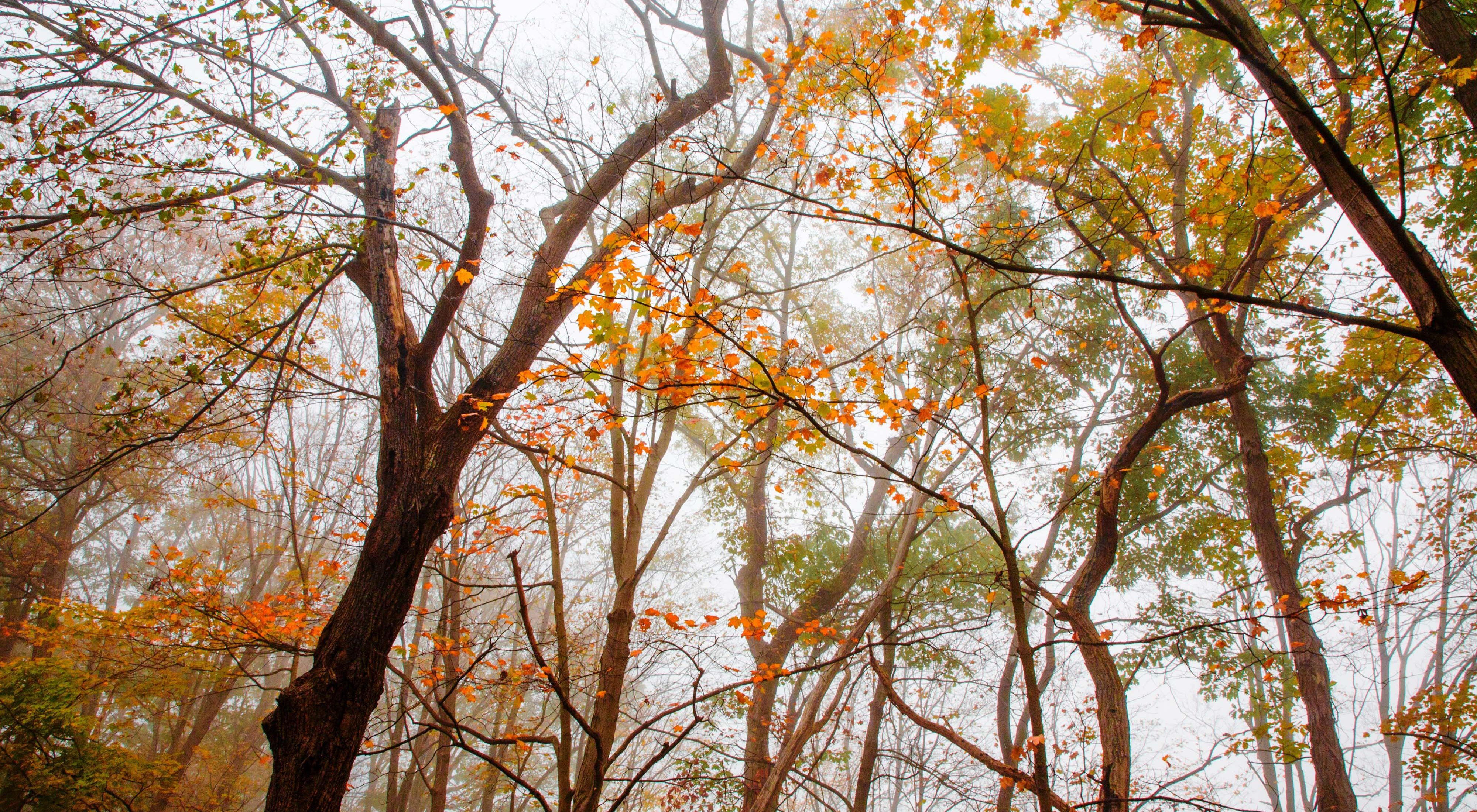 A cloudy sky is viewed through colorful treetops.