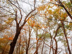 A forest located near Lock Haven, Pennsylvania is enrolled in TNC's Working Woodlands program.