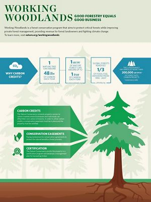 An infographic illustrates how TNC's Working Woodlands program operates.