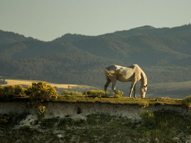 White horse grazes with mountains in background.