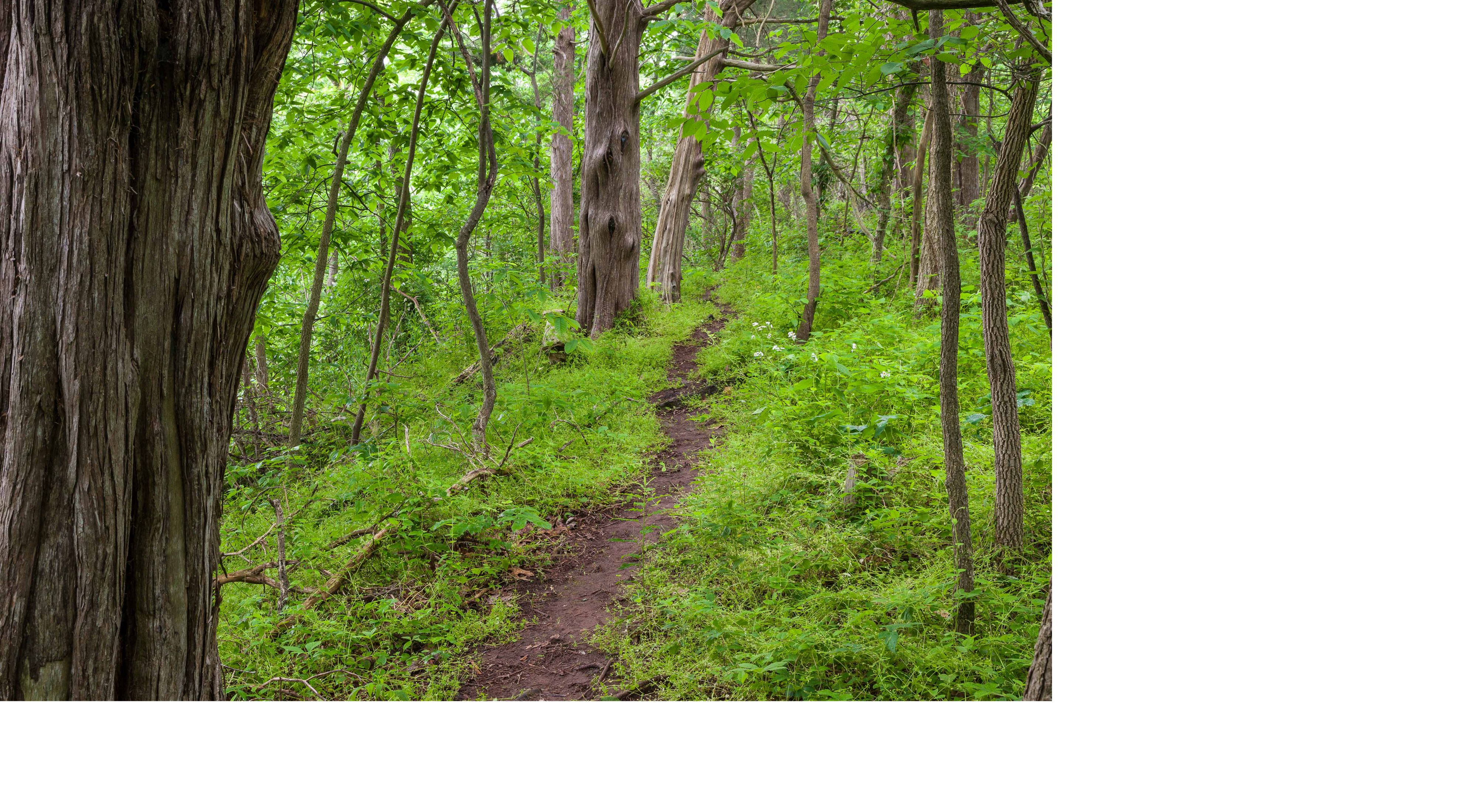 Three well marked trails take the visitor through a variety of habitat types on this West Virginia preserve.