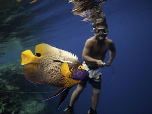 A local speargun fisherman in Micronesia catches reef fish like parrot fish and trivali to feed his family, friends and colleagues.