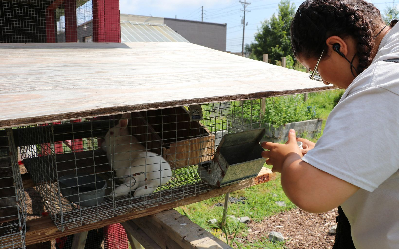 A young woman feeds a rabbit.