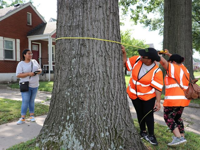 Two young people measure a tree.