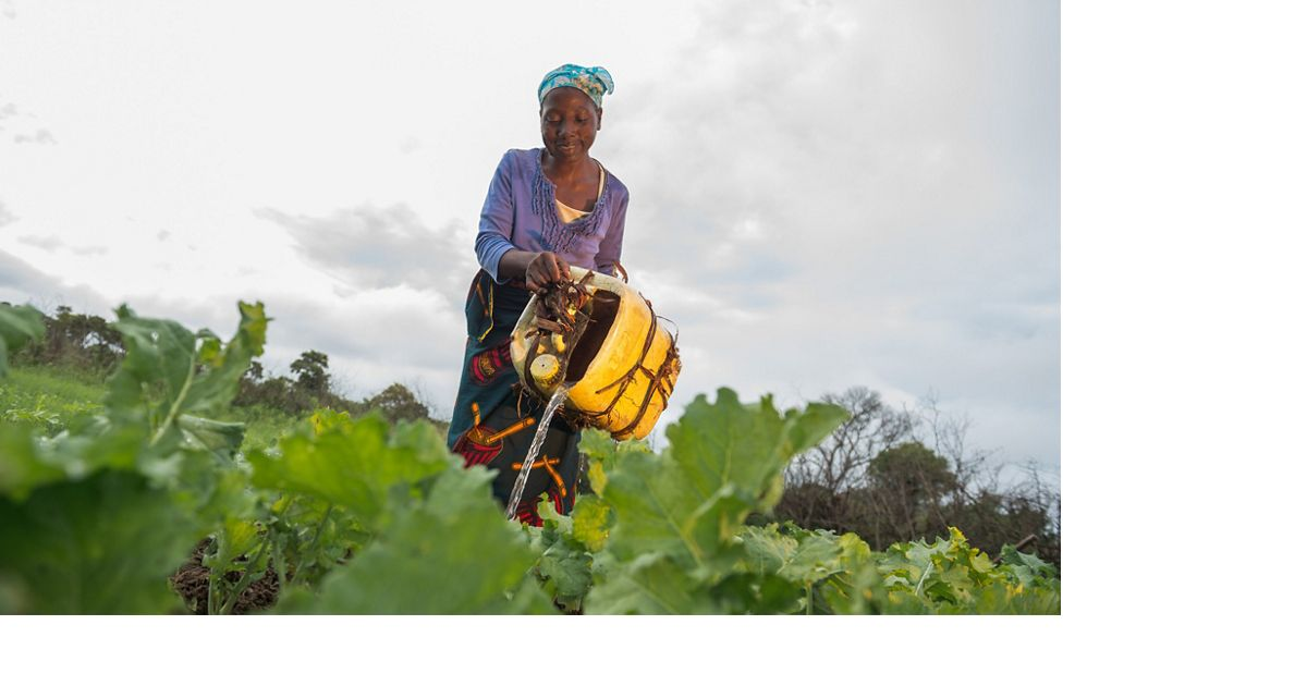 A woman waters her farm from a yellow jerry can