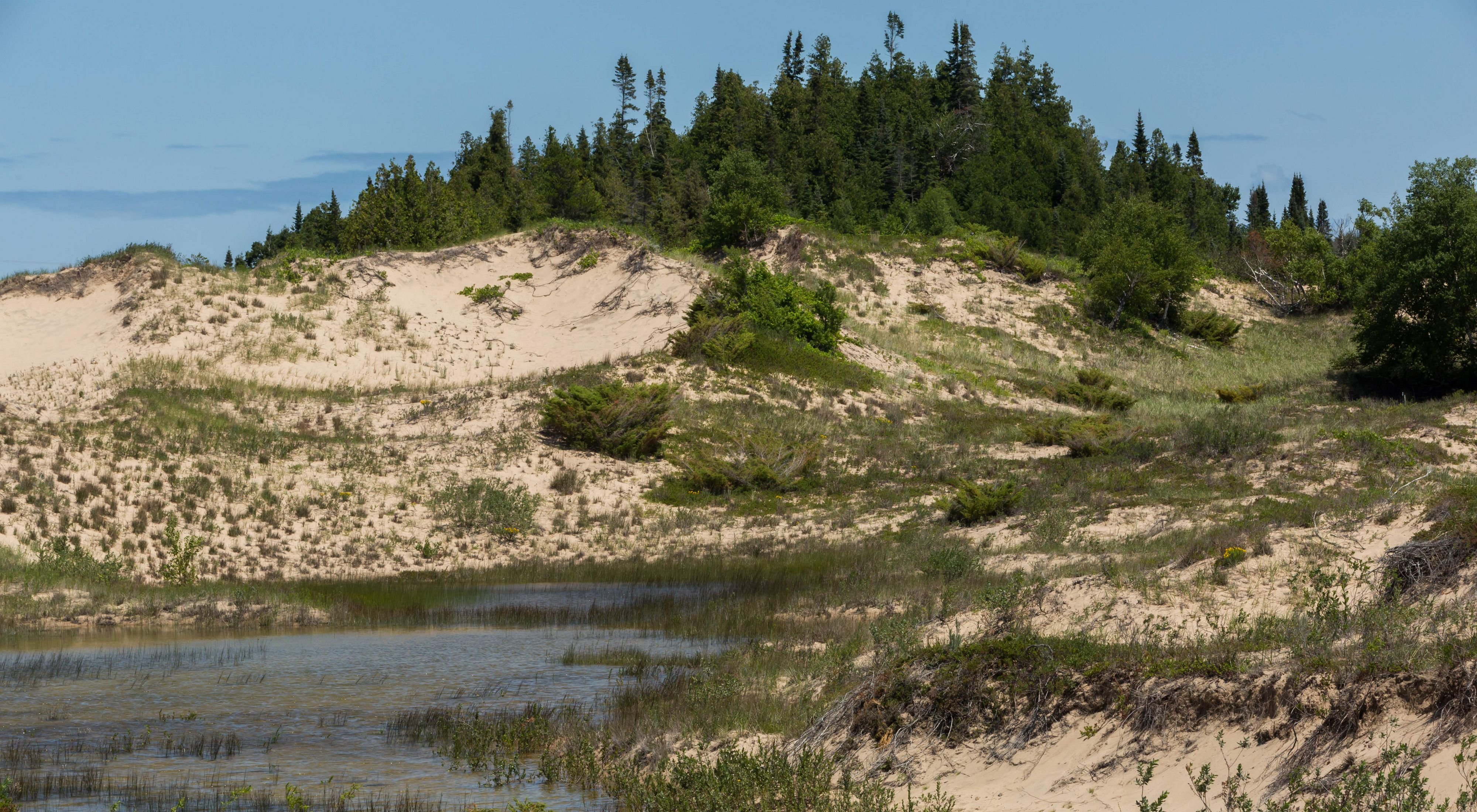 Small forest on top of dune next to big lake.
