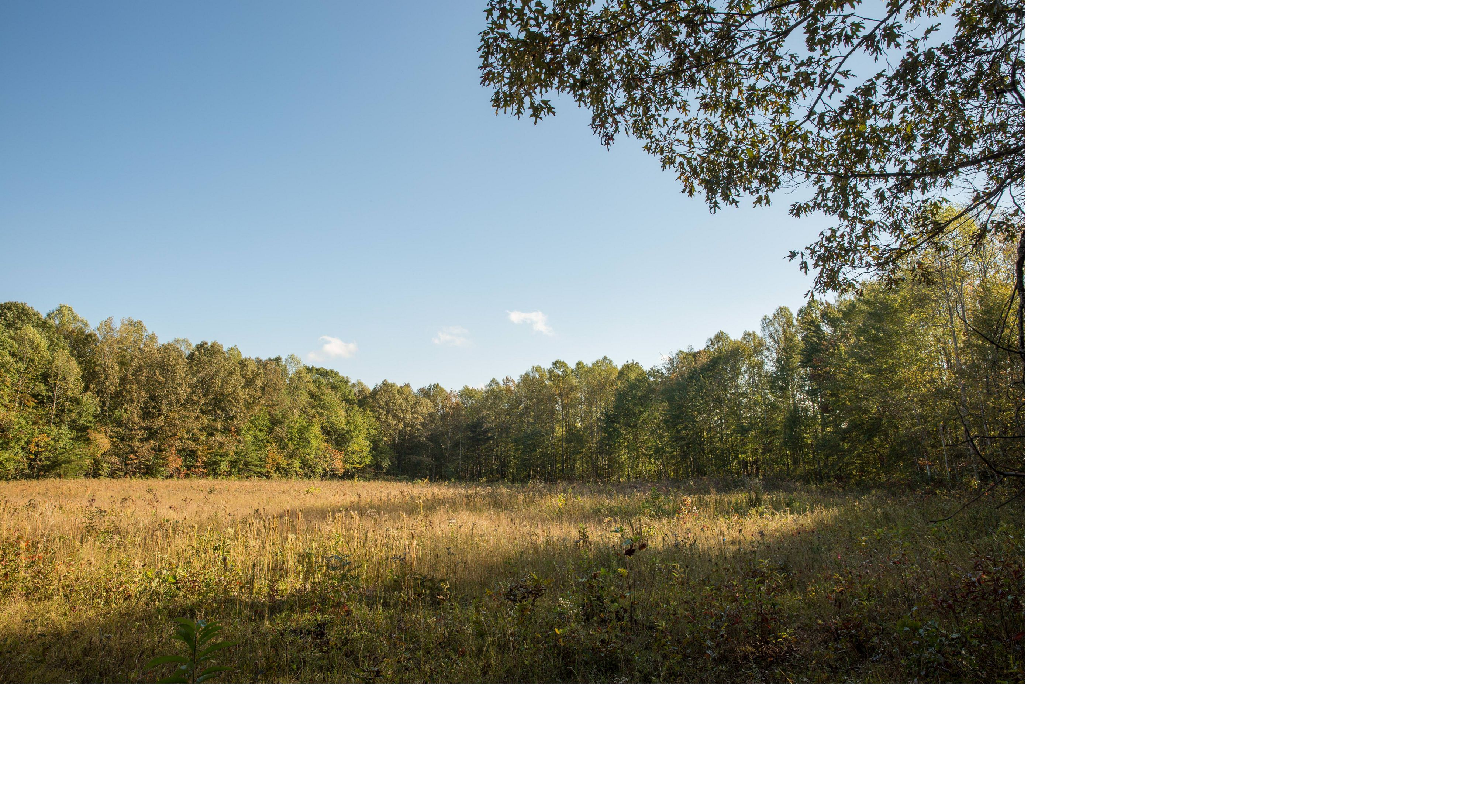An open prairie surrounded by thick stands of green trees.