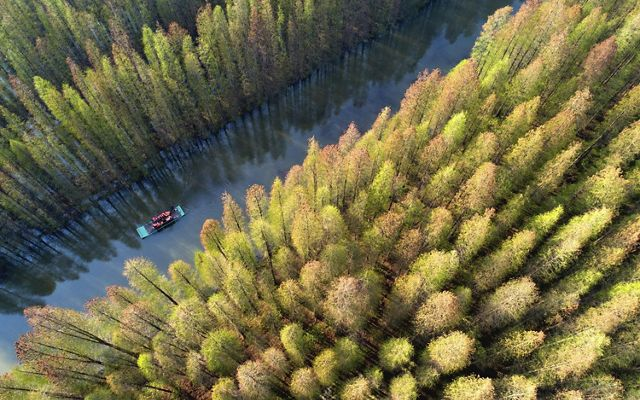 Tourists drift on a bamboo raft in Jinhu county, Huai 'an city, east China's Jiangsu province.