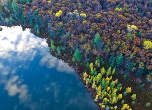 An aerial view of a forest in Michigan. Water in view