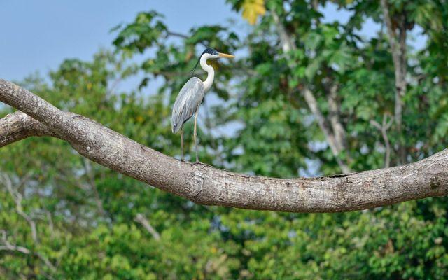 La ciénaga de Barbacoas es de difícil acceso pero esconde una biodiversidad única que contrasta con una cultura muy ganadera en la región.