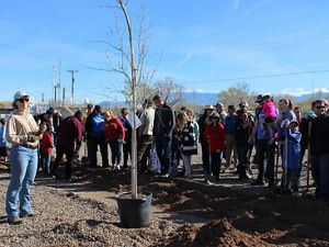 Jennifer Dann from the New Mexico State Forestry demonstrates how to properly plant a tree.