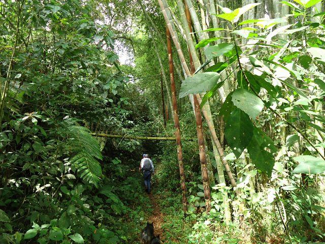 Toda finca tiene áreas con aptitud para actividades, producción, pastoreo, conservación, y es posible aumentar la productividad conservando bosques clave para la naturaleza.