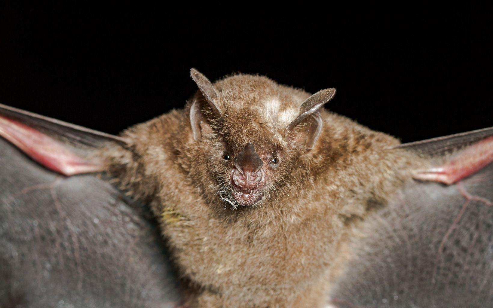 La biodiversidad es indispensable para garantizar los beneficios naturales de una finca, como el agua o la fertilidad. Aves y murciélagos son fundamentales para los bosques.