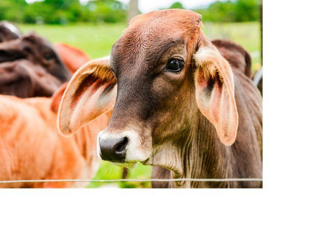 La naturaleza contribuye al bienestar y la productividad de los animales. La reconversión productiva implementa sistemas silvopastoriles para recuperar áreas degradadas.