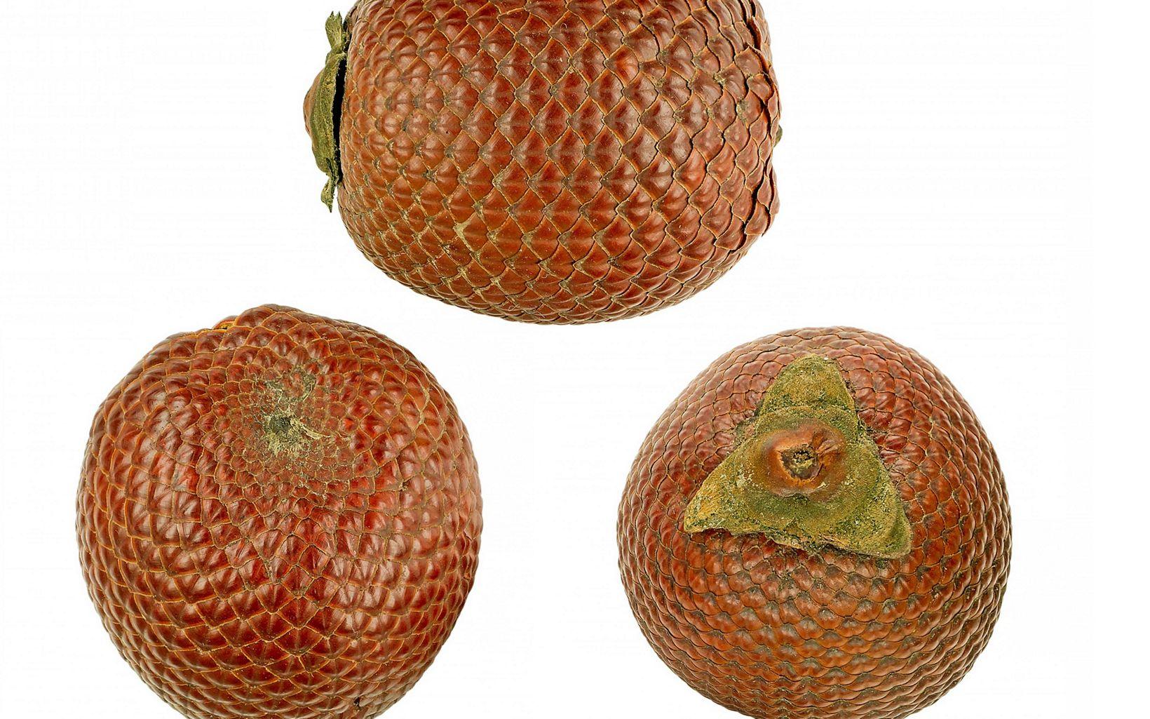 Alimenta personas y fauna. Se pueden extraer productos como su pupla (jugo, helado) o aceite (cosméticos, med.). Se da en grupos de palmas llamadas morichales o cananguchales.