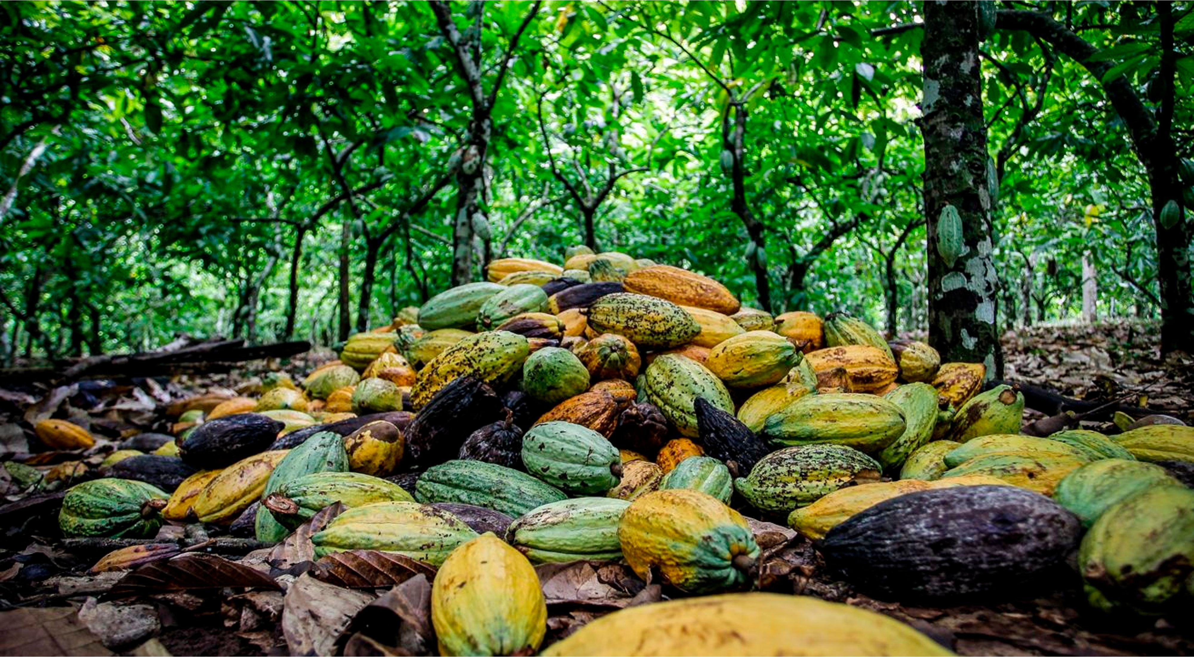 Cultivos en Sao Félix do Xingu, Amazonia brasilera.