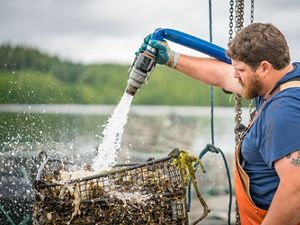 Farming oysters in the protected waters of Prince of Wales Island