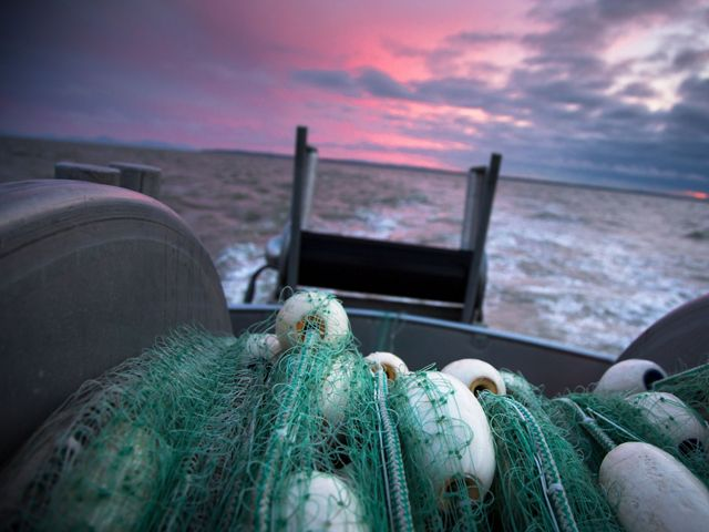 View from the back of a boat holding green nets and white buoys under a cloudy pink and purple sky.