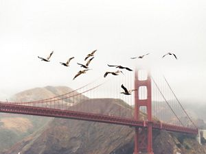 Birds flying past the Golden Gate Bridge.