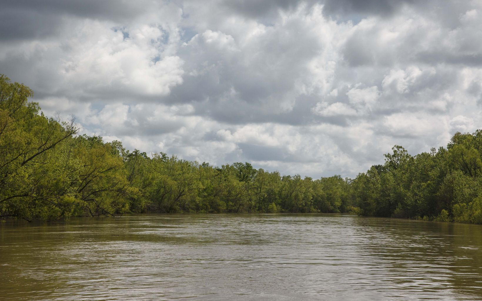 Calm, brown waters of the Atchafalaya River Basin