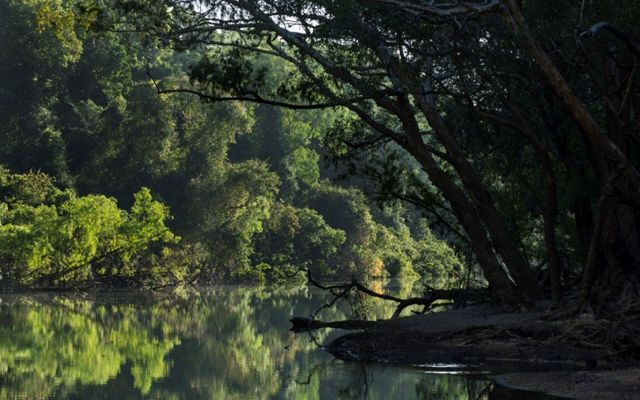 Wenlock River reflections