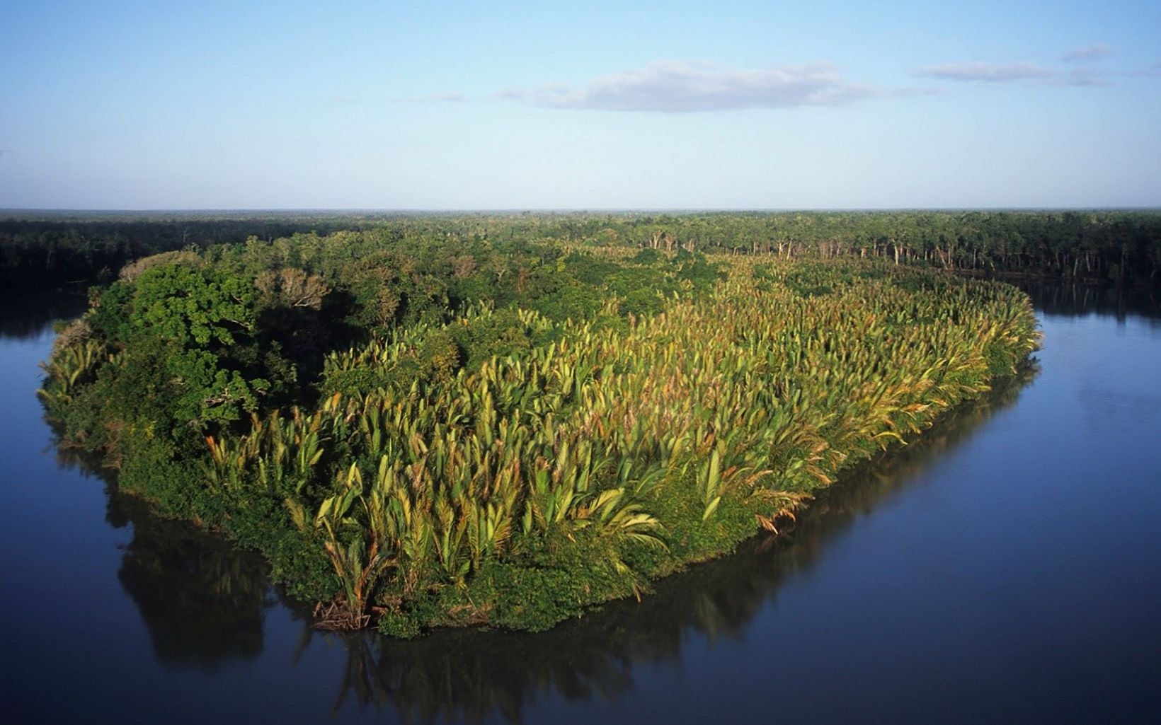 Nypa Palms line the 'Floating Islands' and river bank