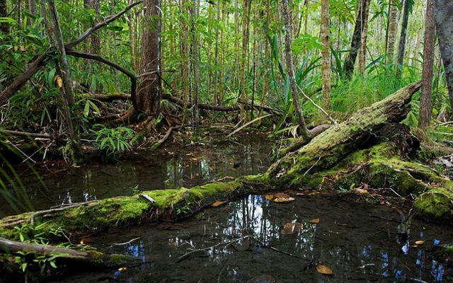 Steve Irwin Wildlife Reserve