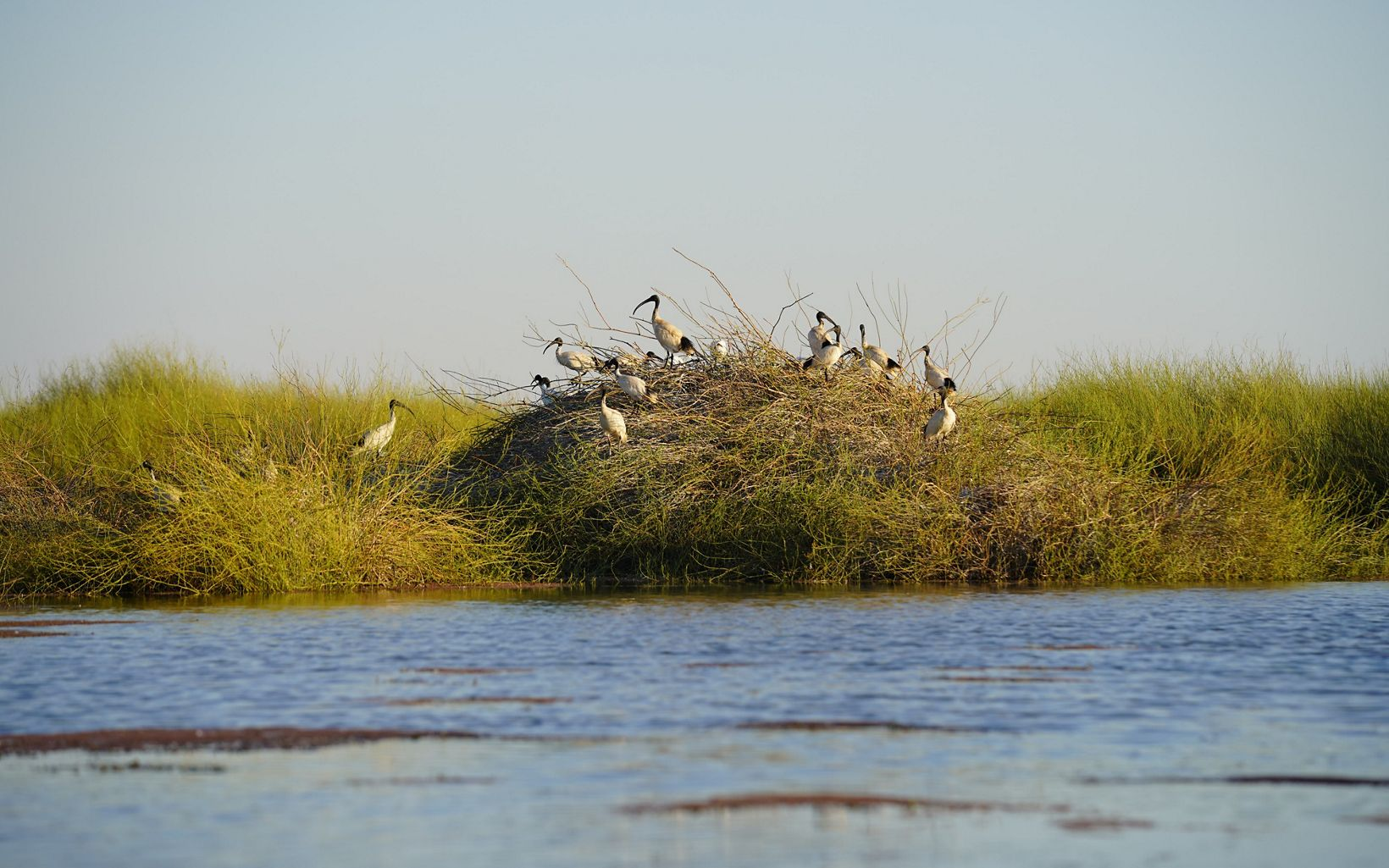 nesting colony at Gayini