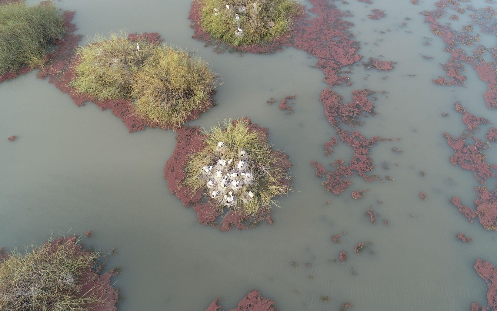 breeding colonies at Gayini from above
