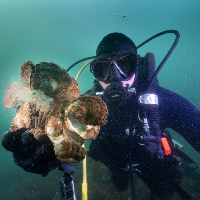 The Nature Conservancy's Simon Branigan shows off some Australian Flat Oysters growing at Margaret's Reef, Port Phillip Bay, Victoria