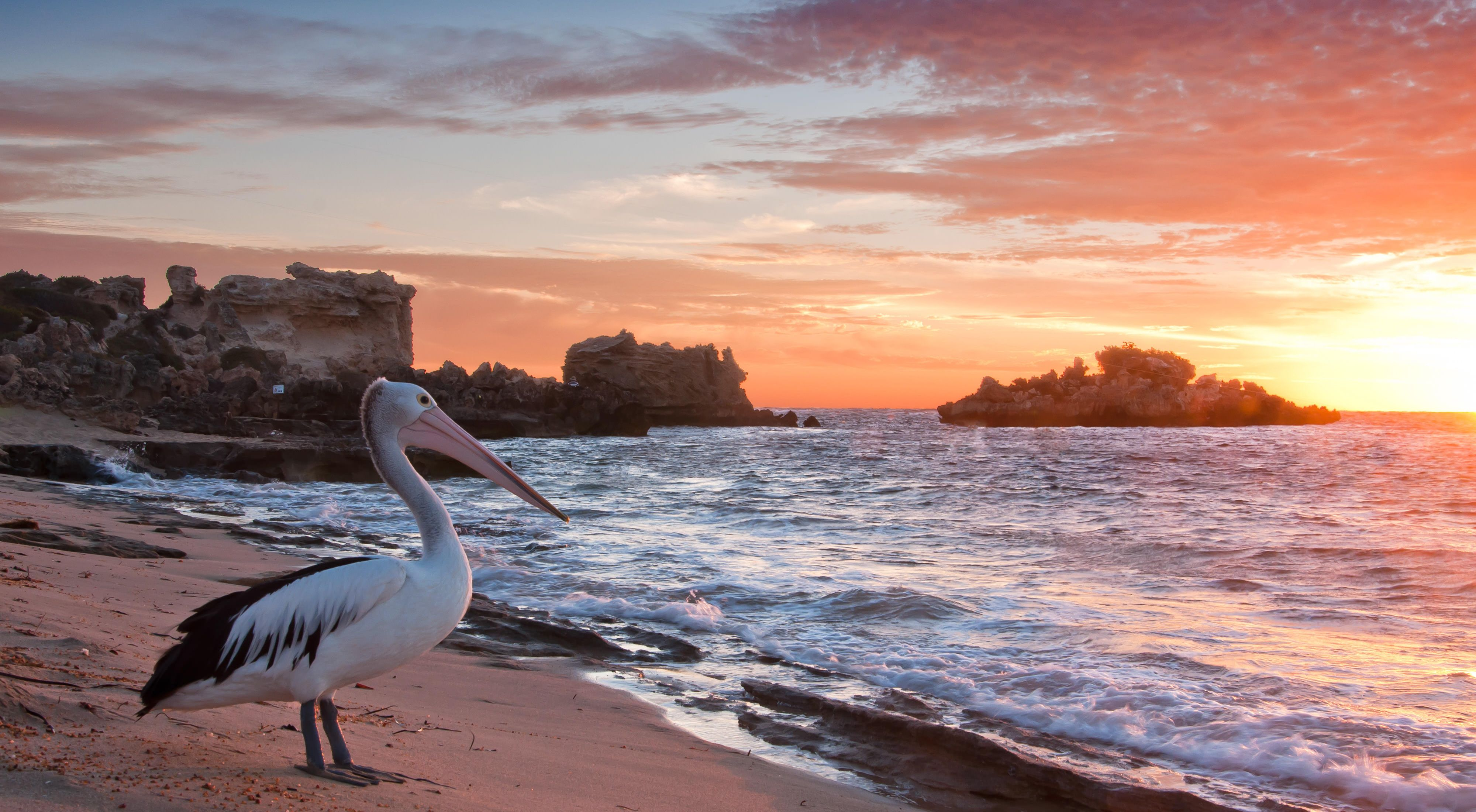 pelican on a beach at sunset