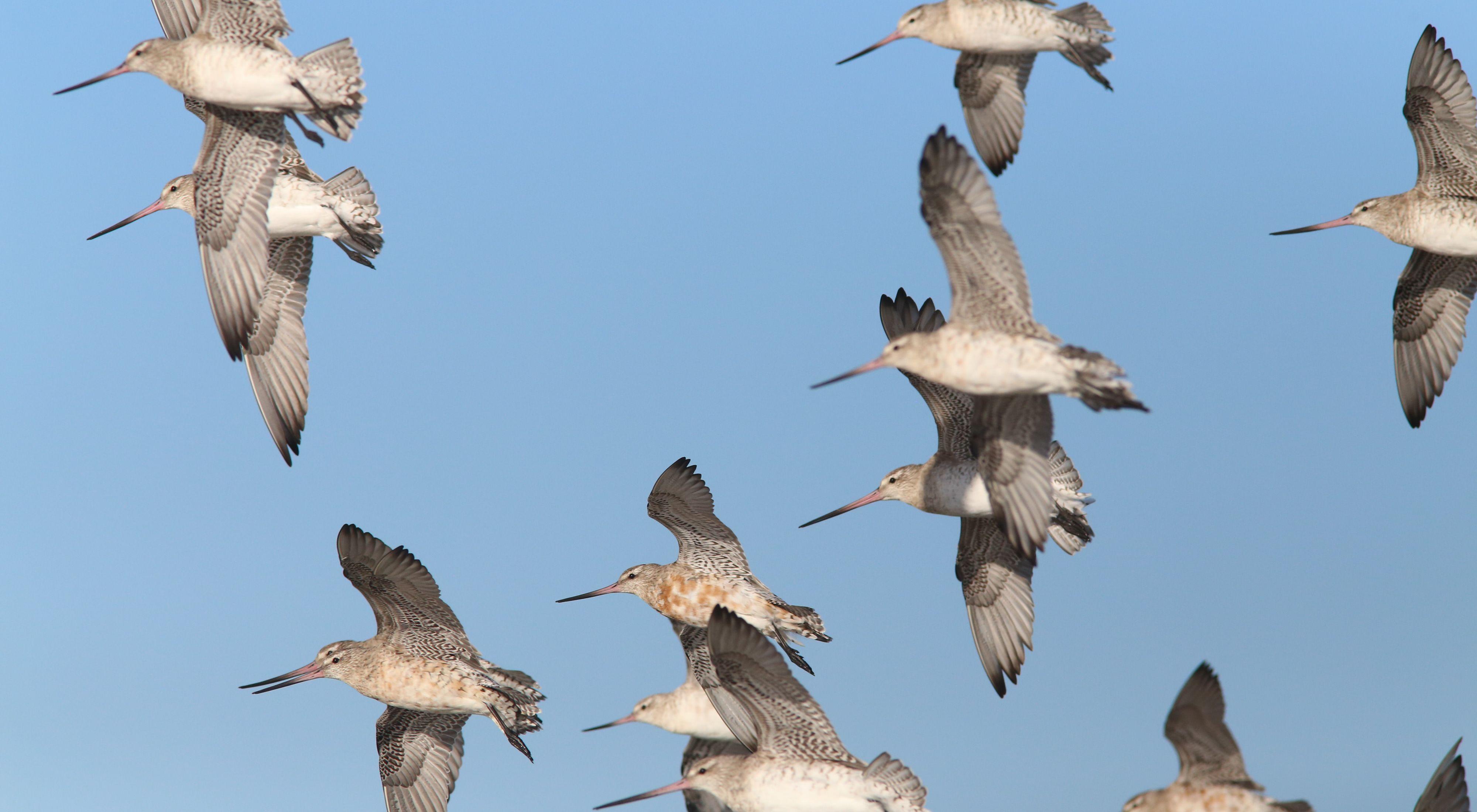white birds in flight in a blue sky