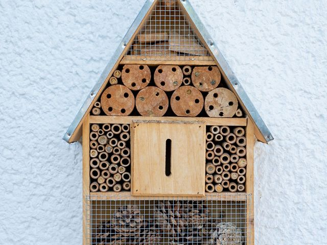 provides a home for native bees