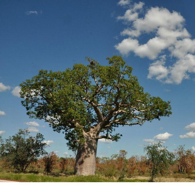 Nyikina Mangala Country