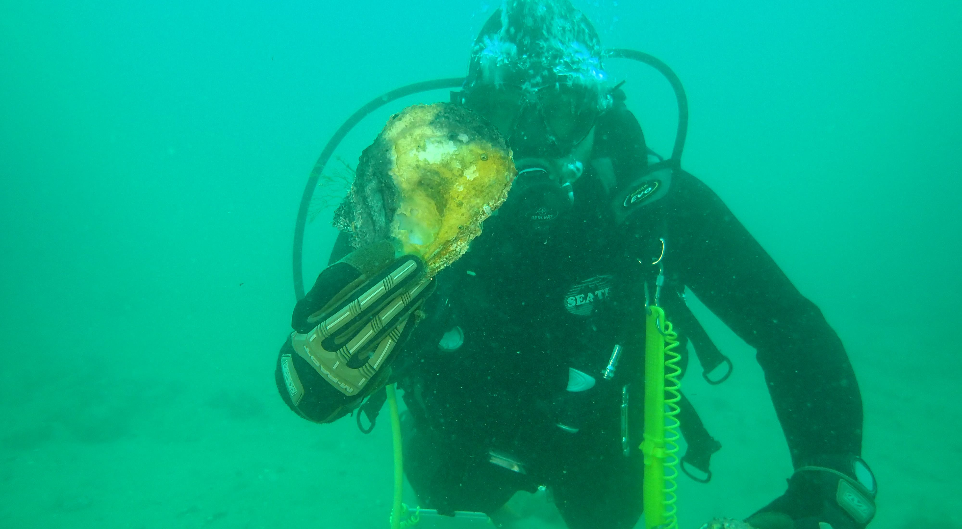 finds evidence of lost oyster reefs off Dromana, Victoria