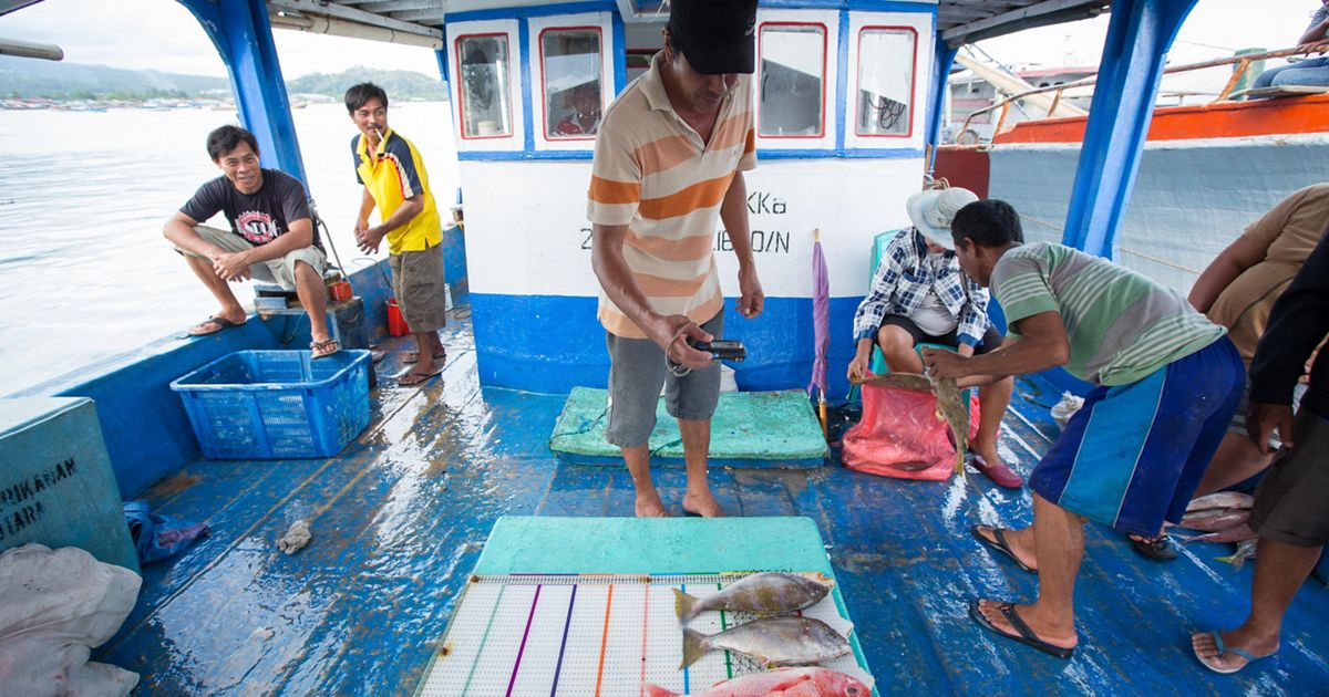 a man on a boat stands over some caught fish as they're being measured
