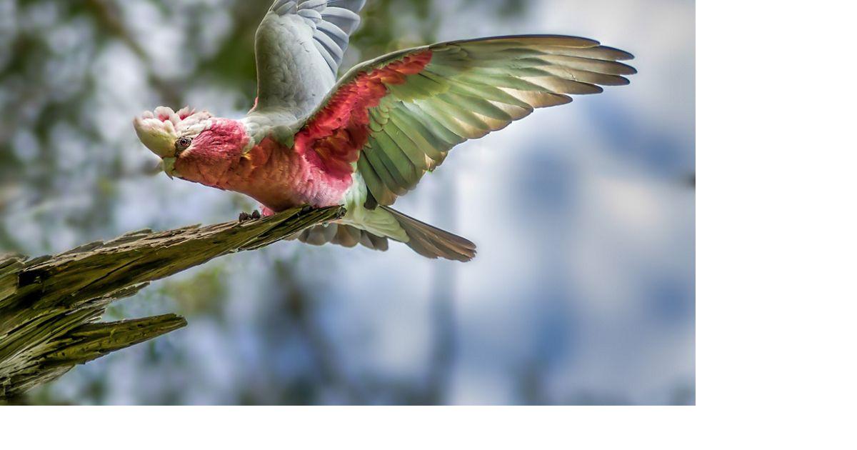 www.natureaustralia.org.au