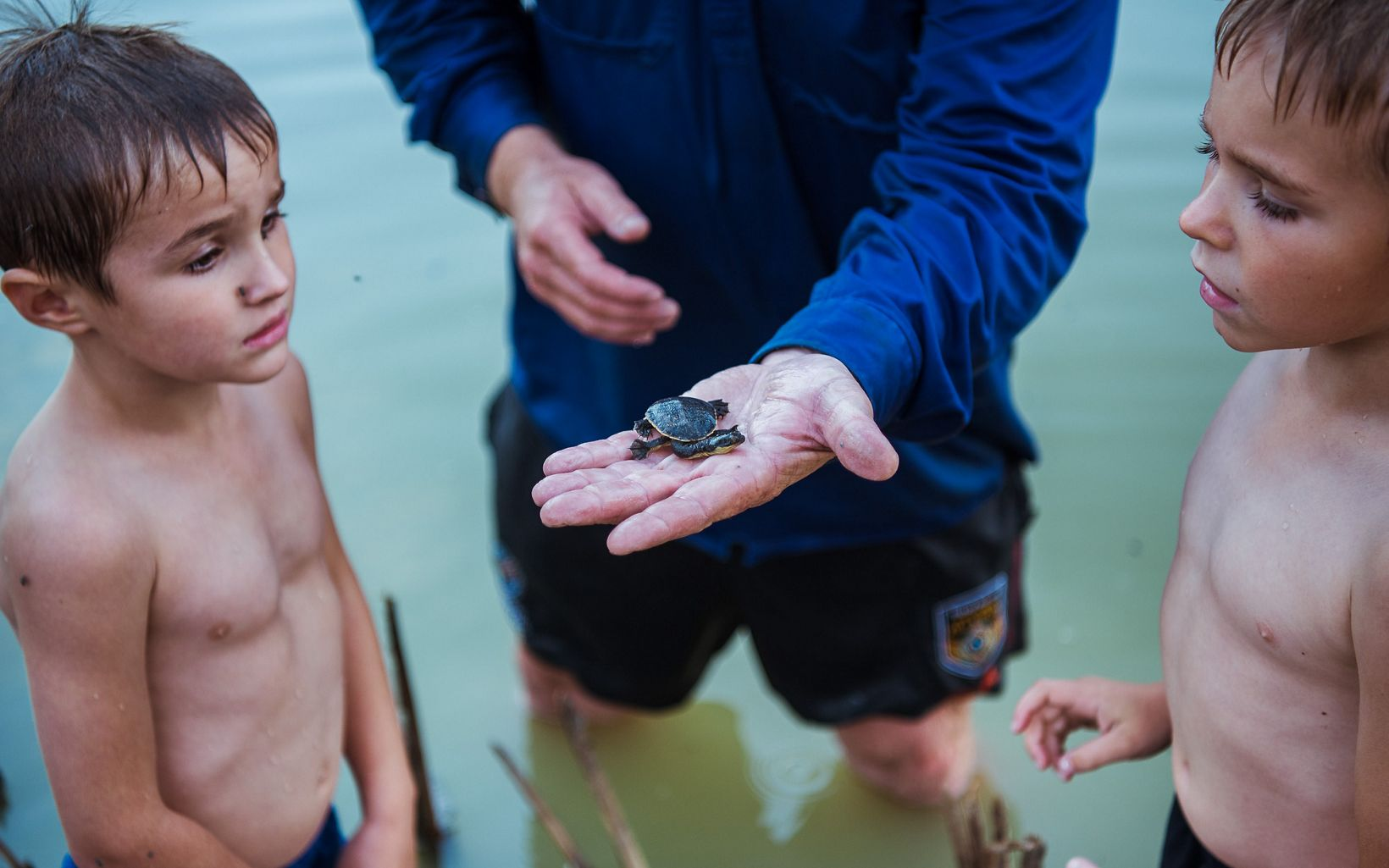 with a young Eastern Long-necked Turtle at Gayini