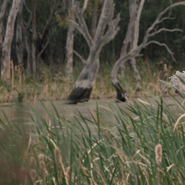 Murray-Darling Basin wetlands