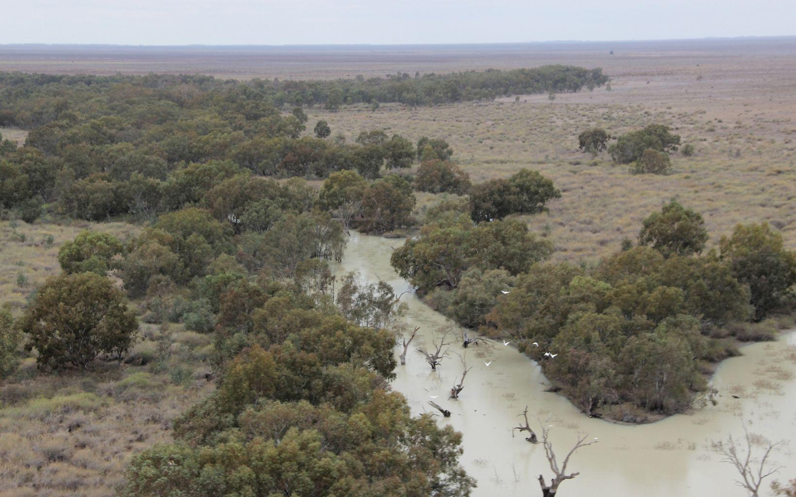 line a creek on Gayini Nimmie-Caira